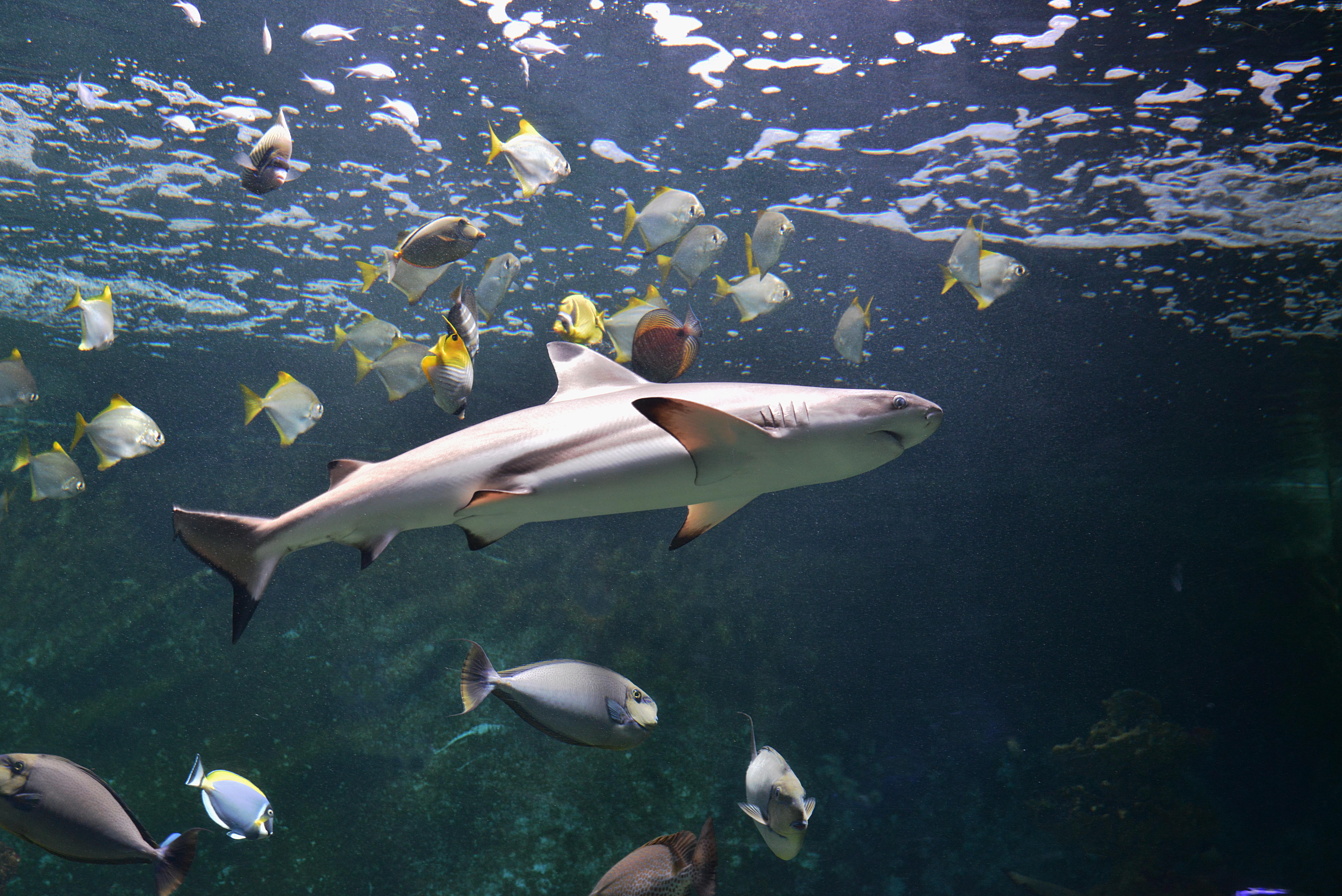 © Aquarium-Muséum Universitaire de Liège