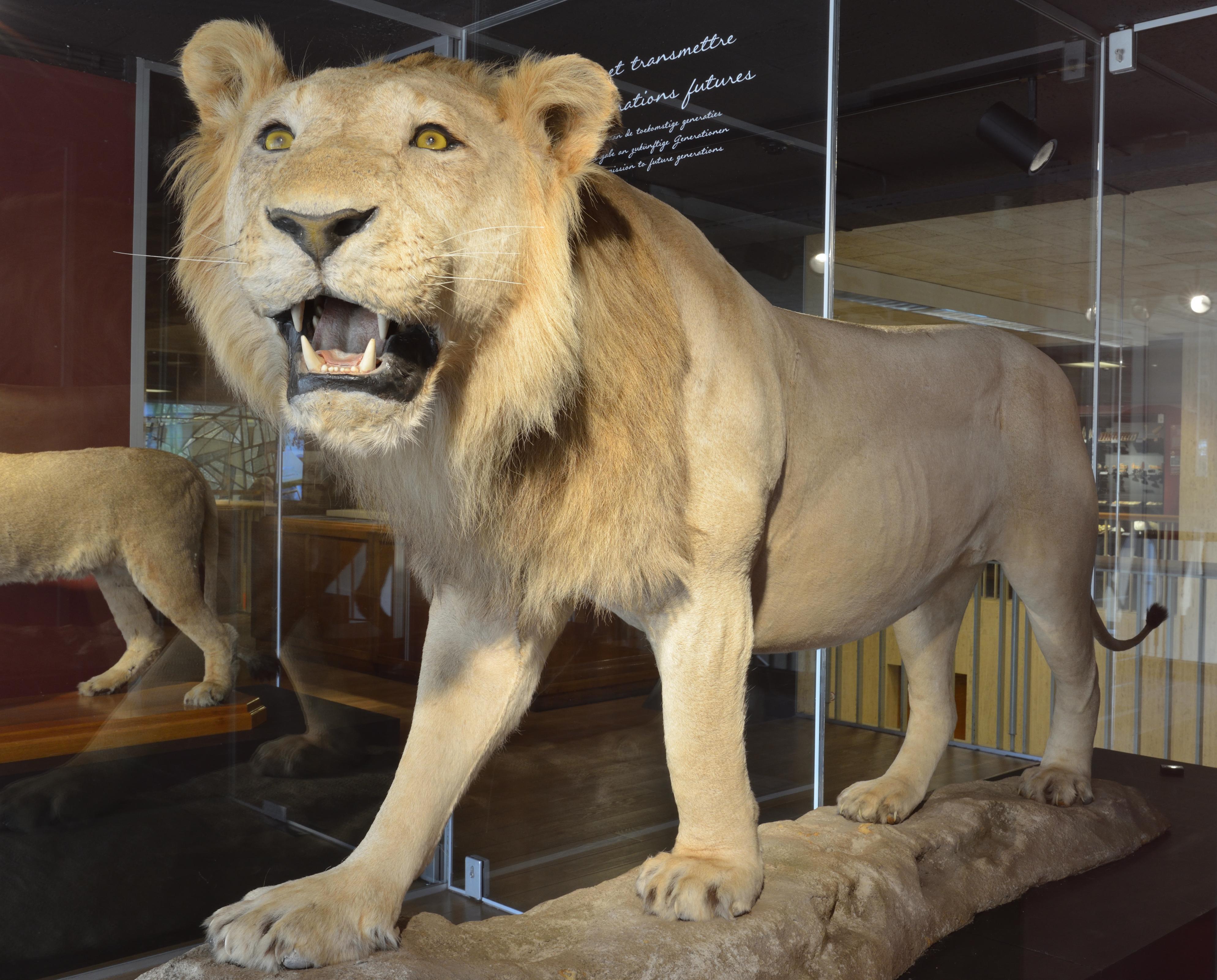 ©Aquarium-Muséum Universitaire de Liège (1A)